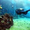 Das Rote Meer lockt Tauchurlauber nach Ägypten