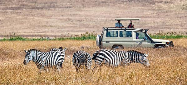 Auf Offroad Safari in Simbabwe hautnah wilde Tiere erleben