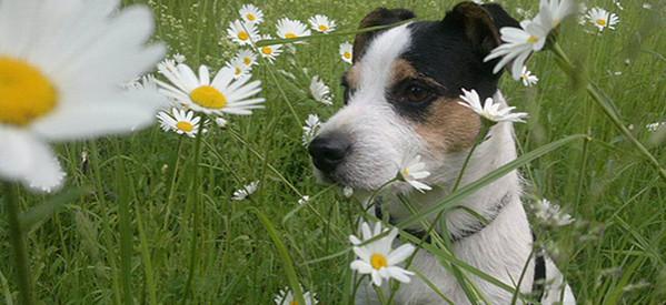 Worauf Hundehalter bei der Urlaubsplanung achten sollten
