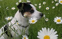 Die Auswahl der Hundebox ist für alle Hundehalter sehr wichtig!